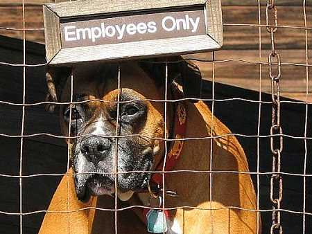 6 Ultimate Working Dogs And Their Jobs