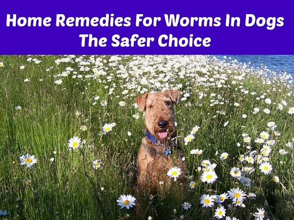 Natural Remedies For Intestinal Parasites In Dogs
