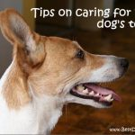 How To Brush Dogs Teeth?
