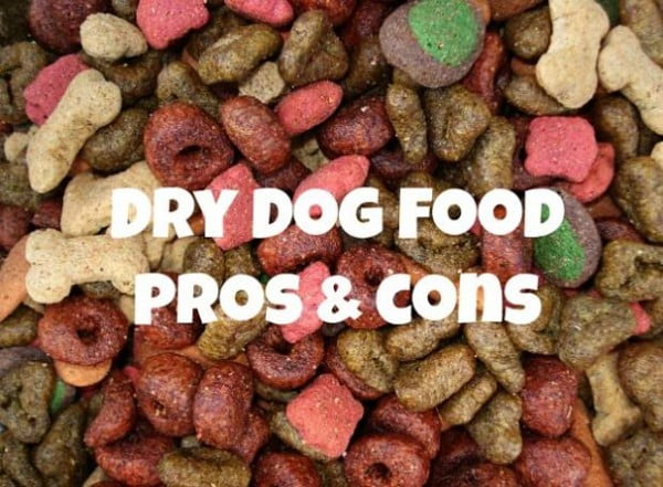 What's best? Dry or wet dog food?