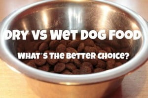 ask yourself dry vs wet dog-food