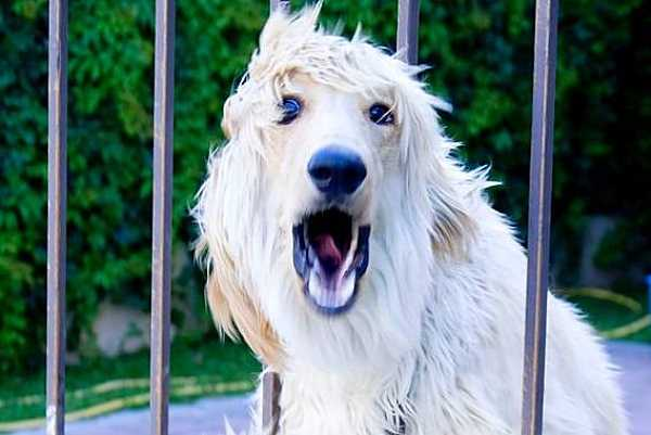 Stop Dogs Barking At Window