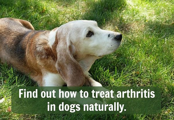 Foods To Treat Arthritis In Dogs