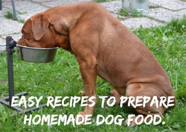 Homemade Dog Food For Dog With Sensitive Stomach